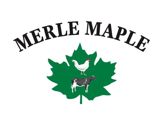 Merle Maple logo.