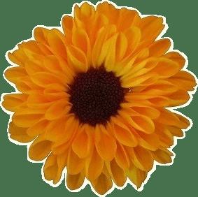 Sue Garing Honey logo.